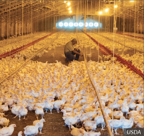 Poultry Farm Worker Career Profile Agcareers Com